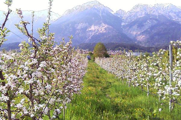 Obstbäume kaufen tirol